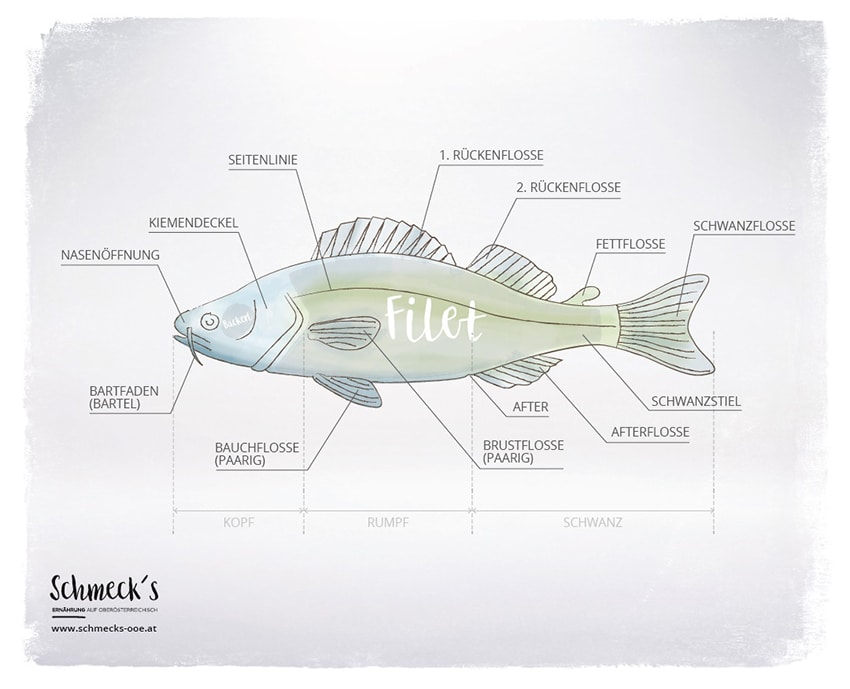 Fisch Grafik
