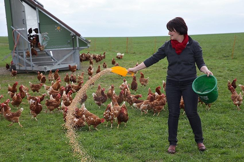 Gerti Selker beim Füttern ihrer Kalimero-Hühner