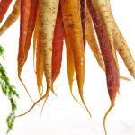 hängendes Karottenbündel