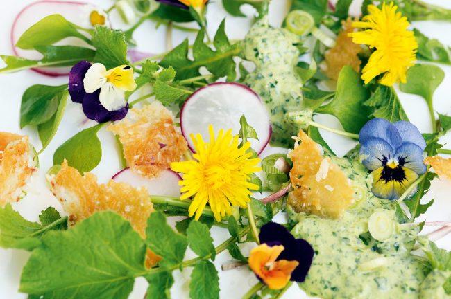 Frühlingssalat mit Kräuter-Honig-Dressing aus Honig-Das Kochbuch