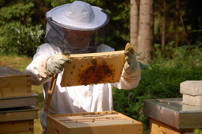 Hermann mit seinem Bienenvolk (Foto: Hermann Honig)