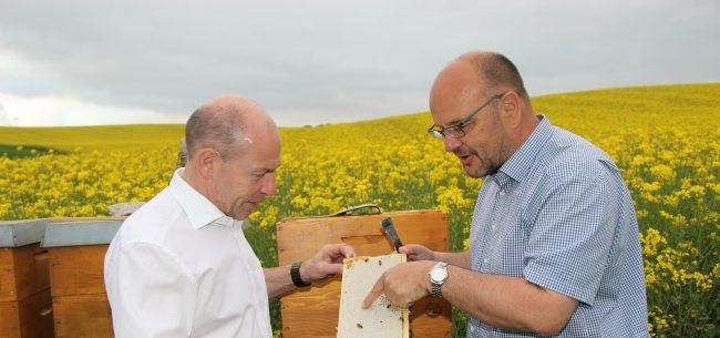 Agrar-Landesrat Max Hiegelsberger mit Bienen