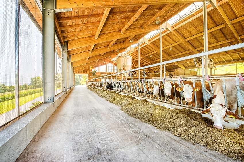 A2-Milch Kuhstall