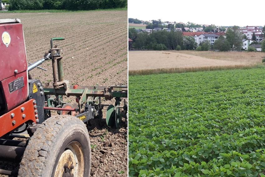 Sojaanbau beim Ackerlhof
